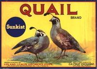 Quail_150